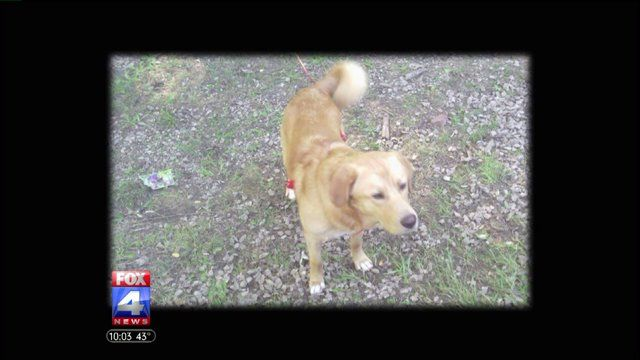 Family Reeling After They Say Golden Retriever Was Fatally Shot By A Police Officer Golden Retriever Old Golden Retriever Police