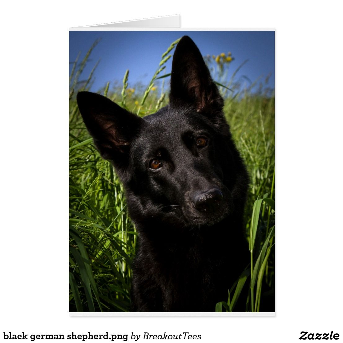 Black German Shepherd Png Black German Shepherd German Shepherd Dogs German Shepherd Puppies