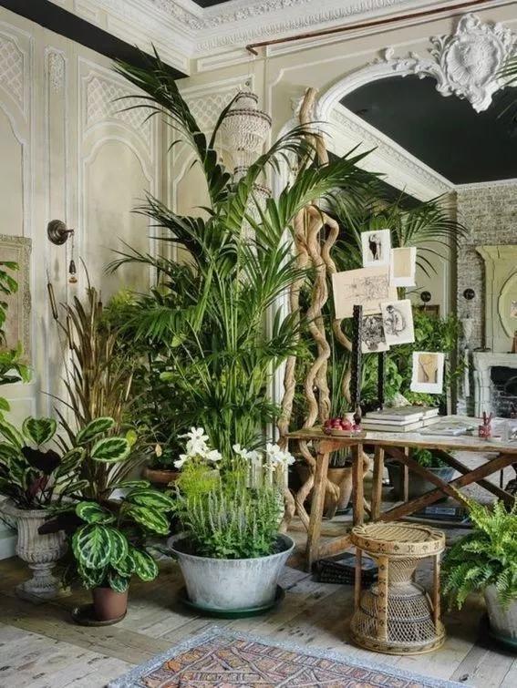 Amazing Indoor Garden 01 00002 Gcan Net House Plants Indoor Jungle Decorations Plants