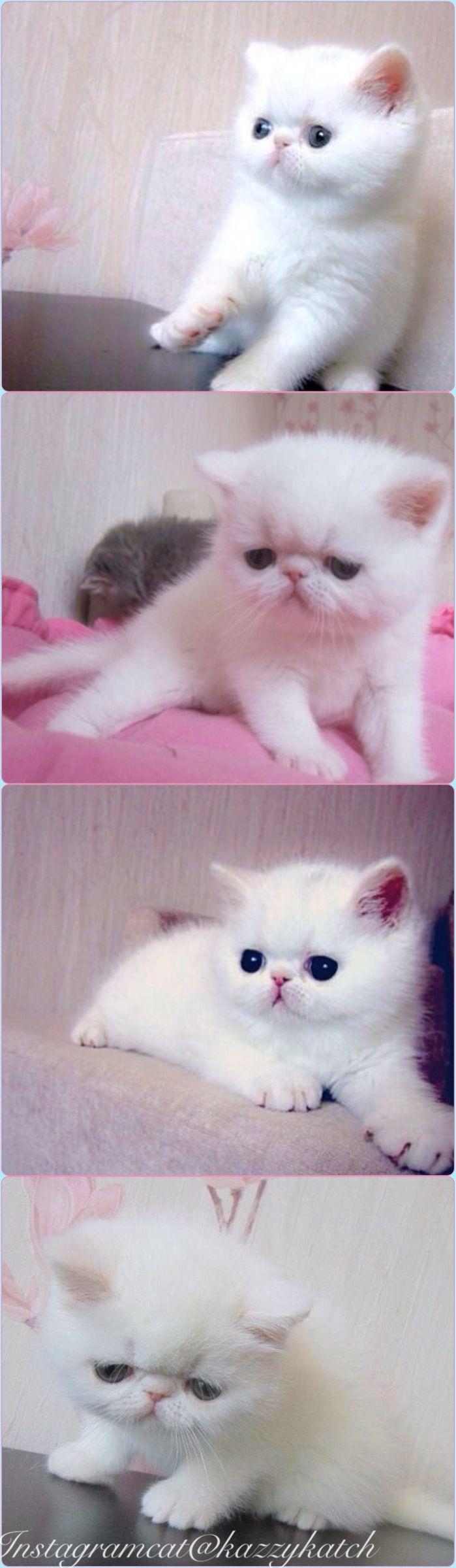 Pin On A Cat Dog Cute Cute