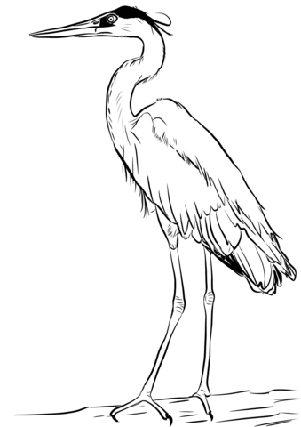 Great Blue Heron Coloring Page From Heron Category Select From 30698 Printable Crafts Of Cartoons Nat Coloring Pages Blue Heron Free Printable Coloring Pages