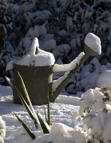 Consejos jardín invierno   Gardening: Winter Gardening Tips