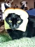 Cat cook with french bread — Stock Photo © Iridi #190131372  |Cat French Bread