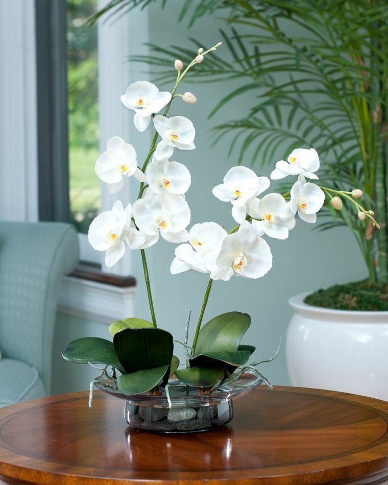 Orchidees Idees Decoration Art Floral Orchidee Deco Plantes