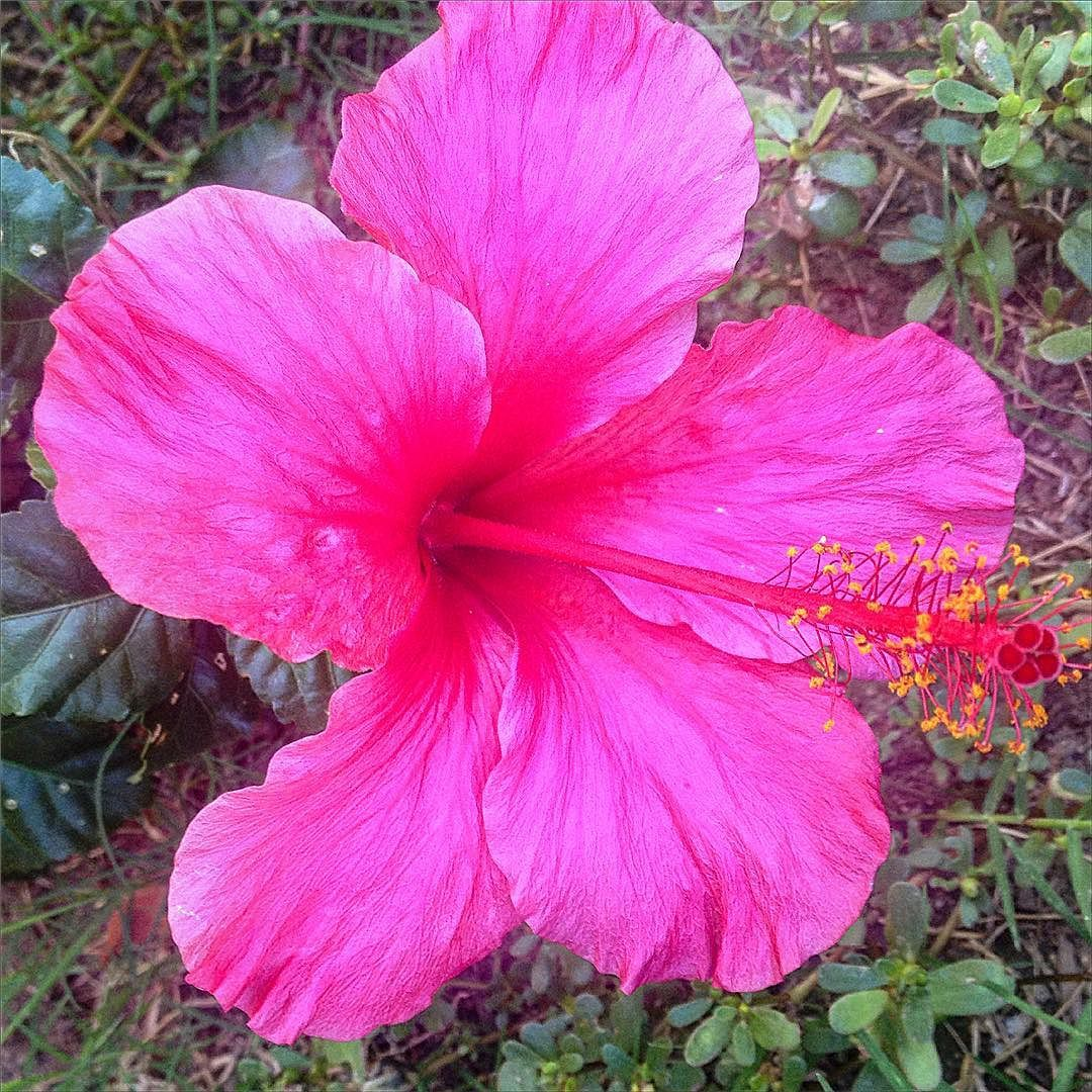 Enjoying The Little Things At Our Listing What A Beautiful Wednesday Hibiscus Flower Listings Realtors Nature Flowers Hibiscus Instagram Posts
