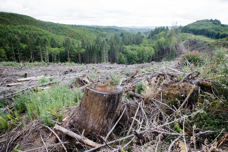 How Far To The Next Forest A New Way To Measure Deforestation