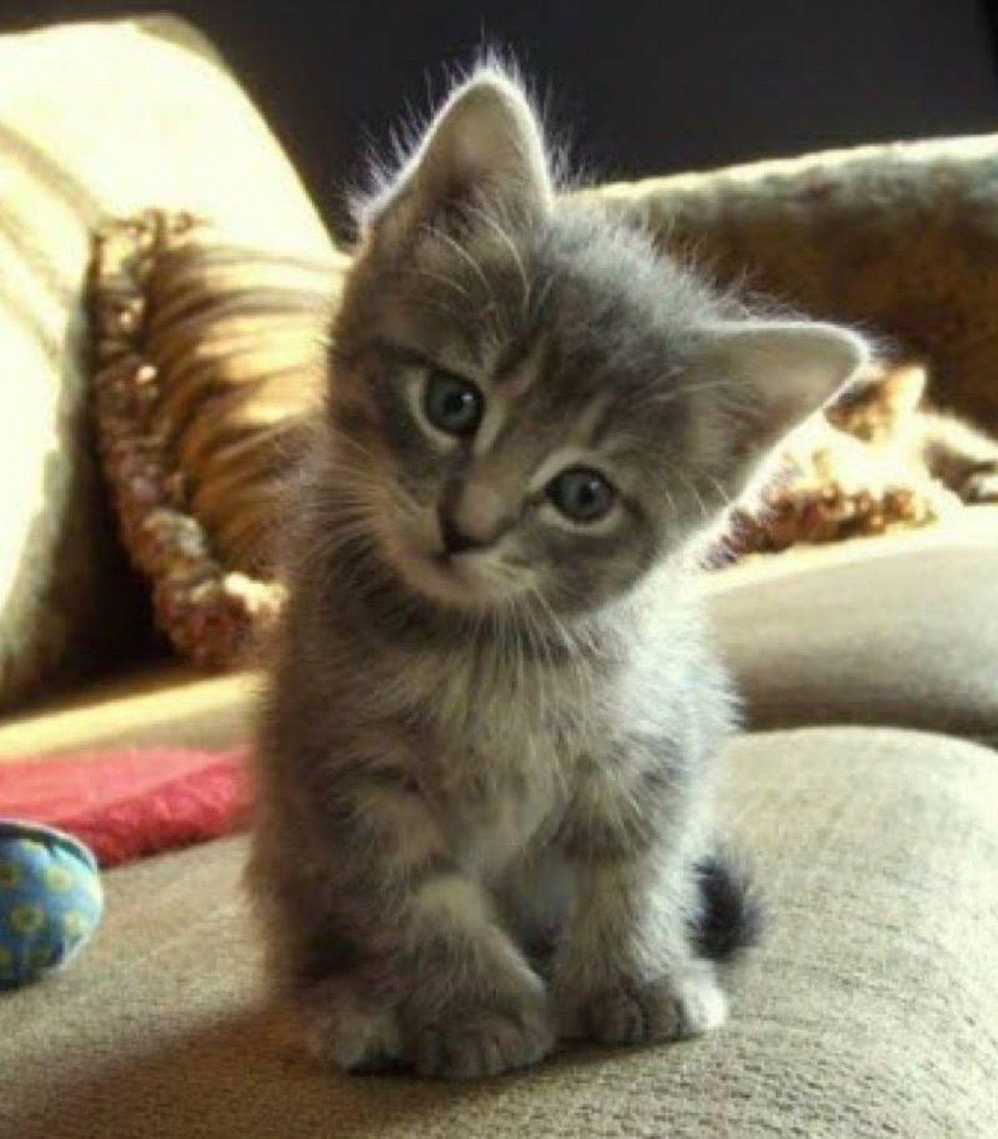 Pin by Rhonda Gilmore on Cute things ️ Kittens cutest