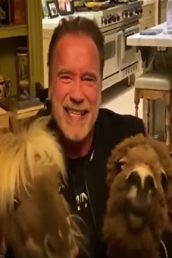 Arnold Schwarzenegger Joined By Mini Horse And Donkey Advises People To Stay Home Video In 2020 Mini Horse Horses Deadpool Pictures