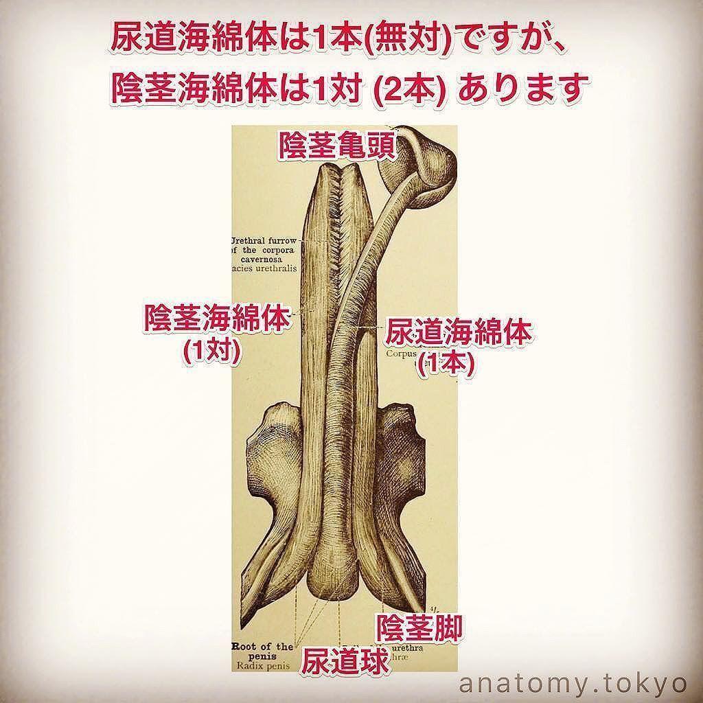 痛み 陰茎