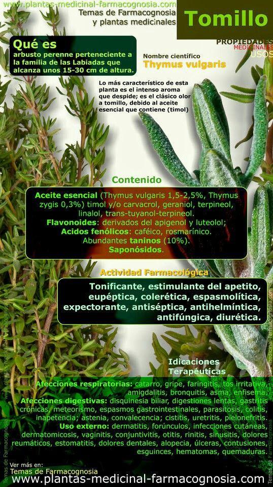 Renedios Caseros Hierbas Curativas Herbología Plantas Medicinales