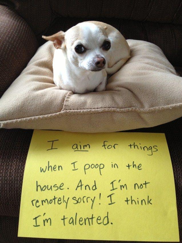 Dog Shaming I Aim To Please Dog Shaming Silly Animals Animal