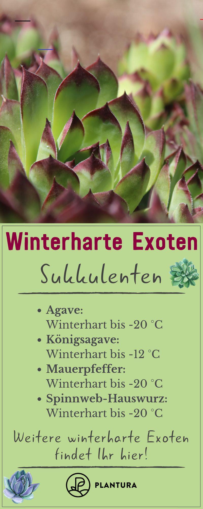 40 Inspirierend Schones Fur Den Garten Exotische Pflanzen Pflanzen Ungewohnliche Pflanzen