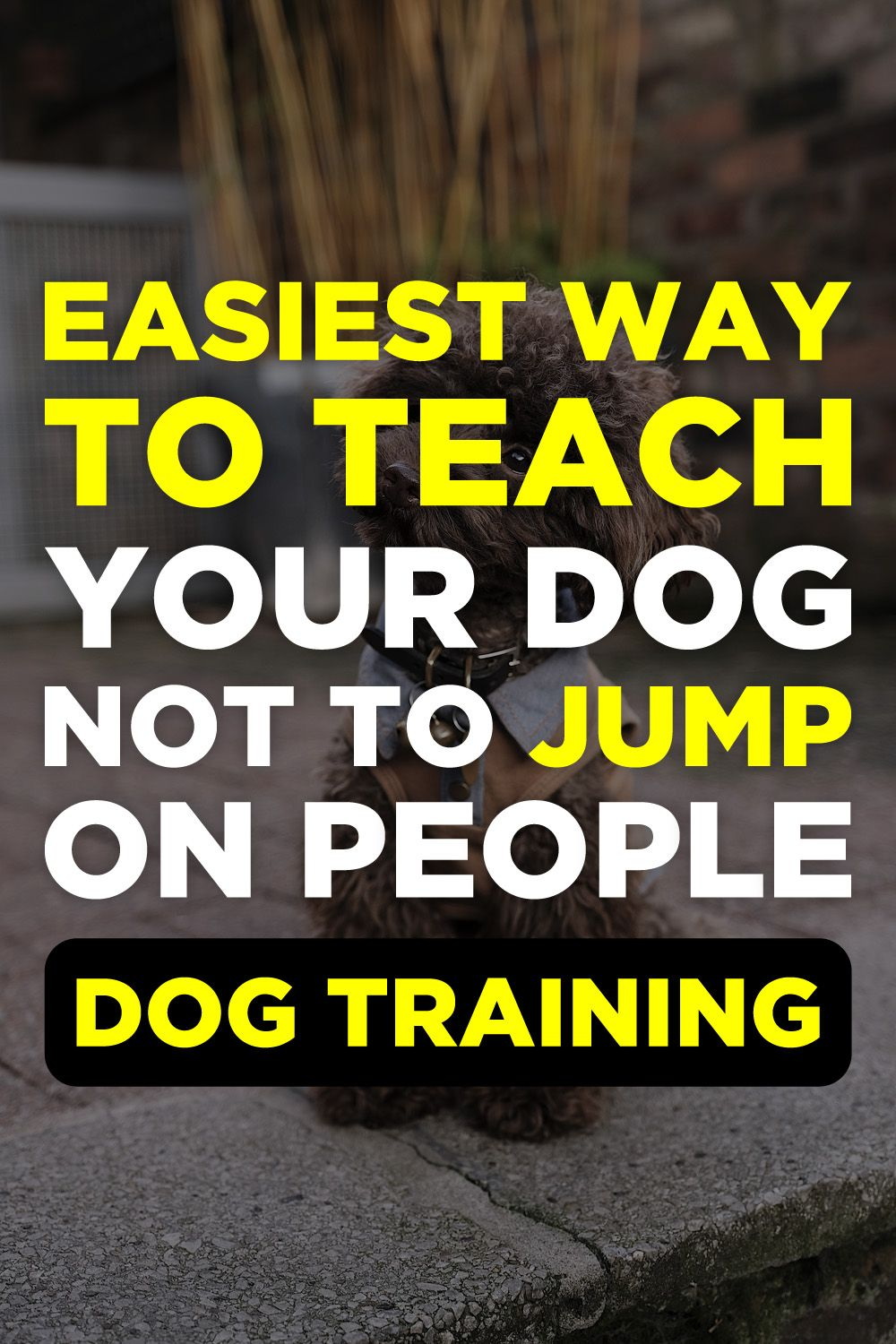 Brain Training For Dogs Review Agressive dog training