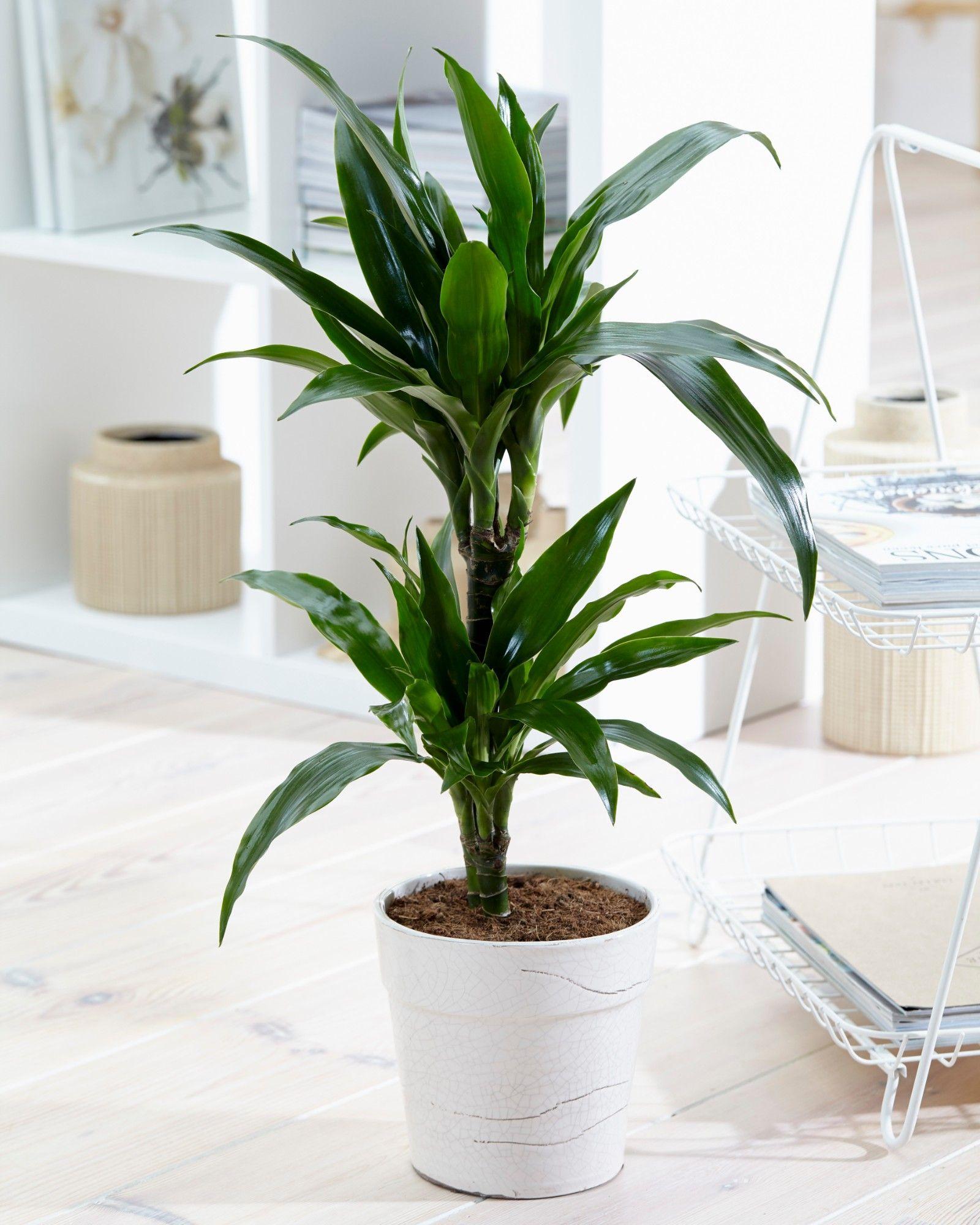 plante detoxifiante interieur)