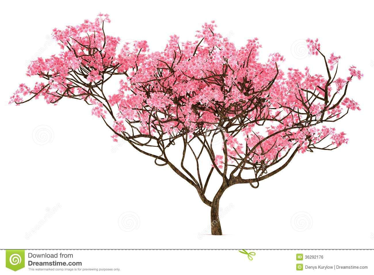 Uncategorized Cherry Blossom Tree Sketch sakura tree isolated royalty free stock photos image 36292158 36292158