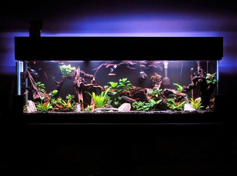 55 gallon freshwater tank aquariums and beautiful fish for 55 gallon aquarium decoration ideas
