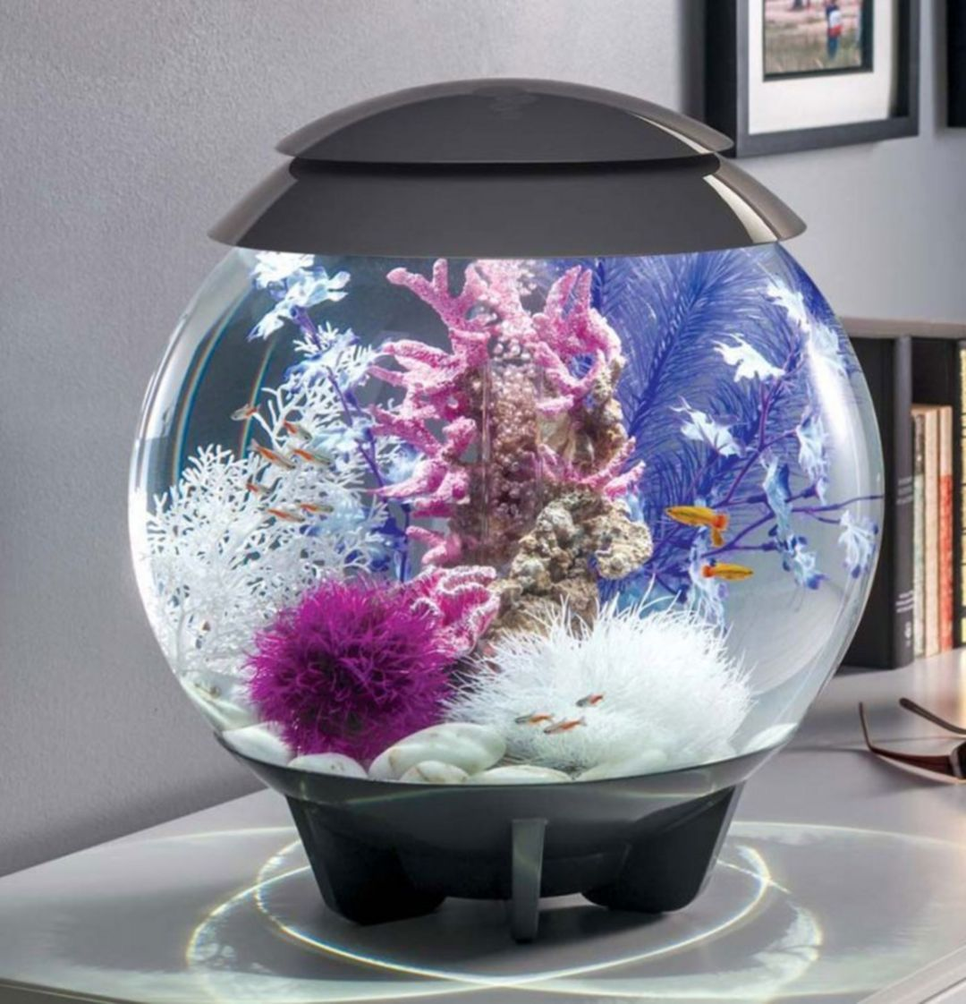 Home Aquarium Design Ideas: 15 Unique Minimalist Ornamental Fish Aquarium Designs For