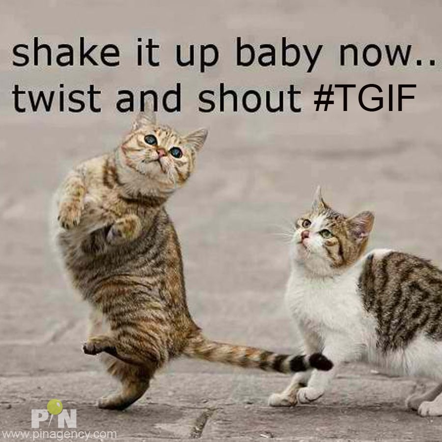 cat tgif twist and shout