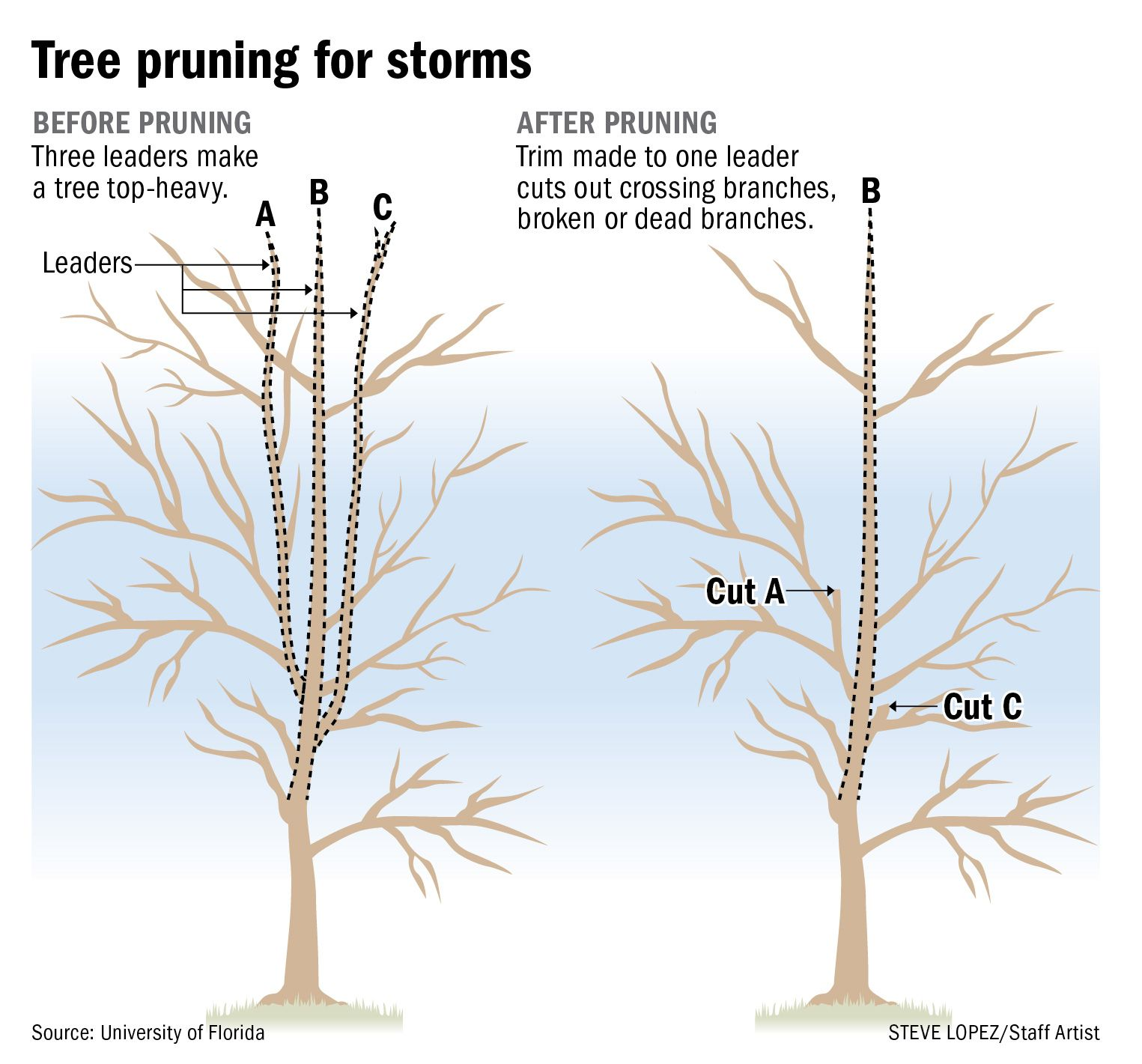 Landscapes Trees And Yard Weatherplus Landscape Tree Pruning Tree