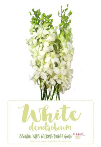 Essential white wedding flower guide names types pics types of white flowers white dendrobium orchid click here for 20 white wedding flowers mightylinksfo