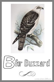 bird printable buzzard images 2 this is a honey buzzard image these bird template cards have - Printable Bird Pictures 2