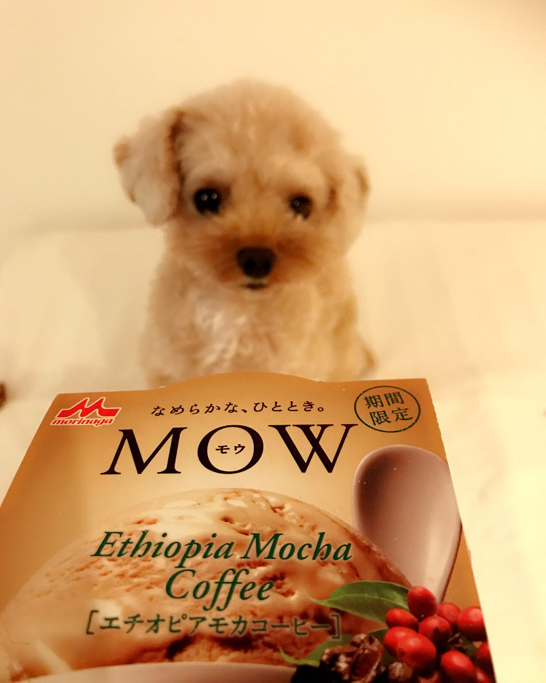 常日頃mowのクオリティーの高さを崇拝 新作なのかな エチオピアモカコーヒー は最高 大好きなミカドコーヒーのモカ ソフトやマッターホーンのモカソフトよりもコスパ考えると上 Mow エチオピアモカコーヒー コンビニアイス T