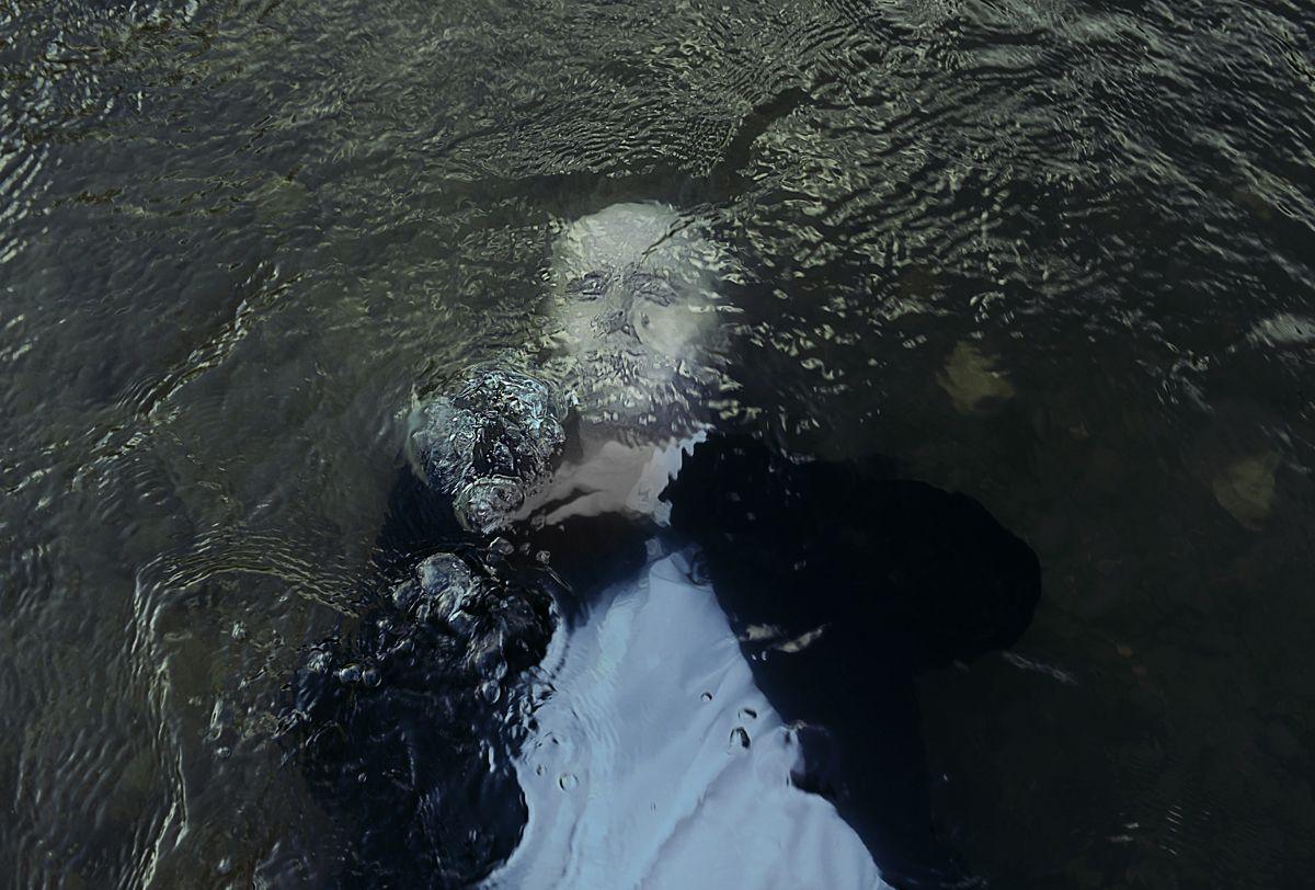 """""""Drowned Soul"""" — Photographer: Oleksandr McQuartz"""