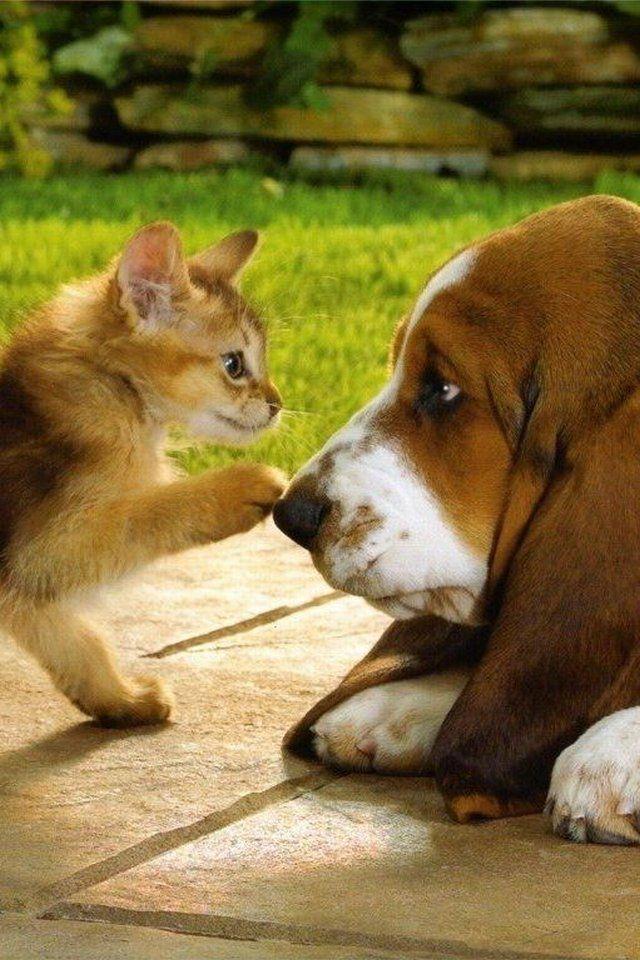 犬と猫の動物壁紙