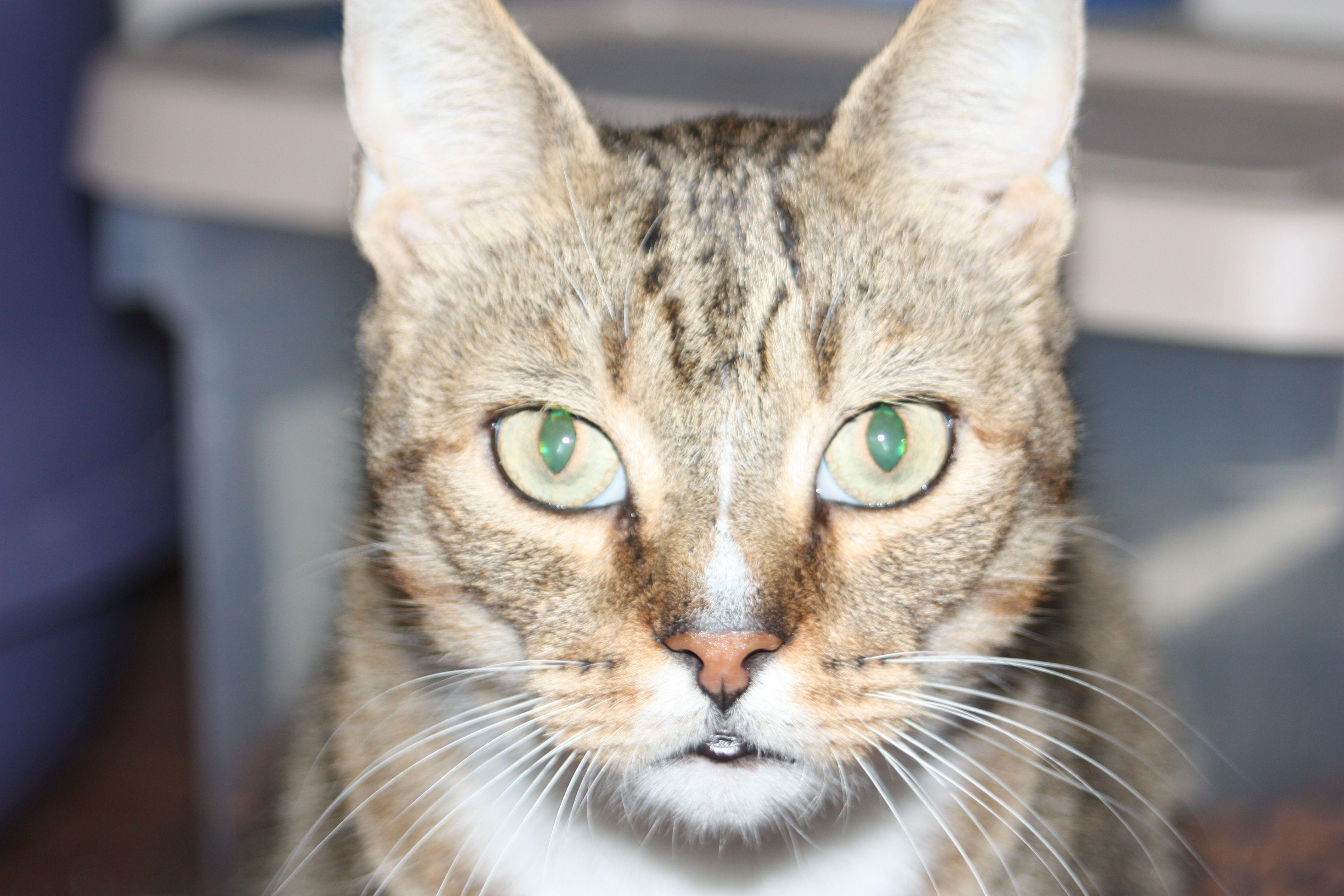 Jack the wild kitty cat. | Cats, Animals, Furry