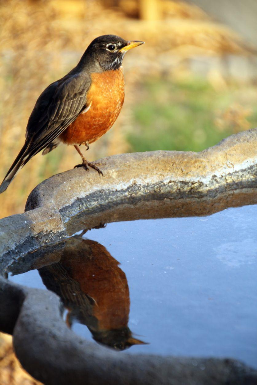 Comment donner de leau aux oiseaux durant toute lannée ?