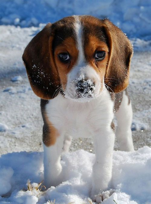 Cute Photos Of Dog Playing In Snow Photo By Zuo 2008 Cute