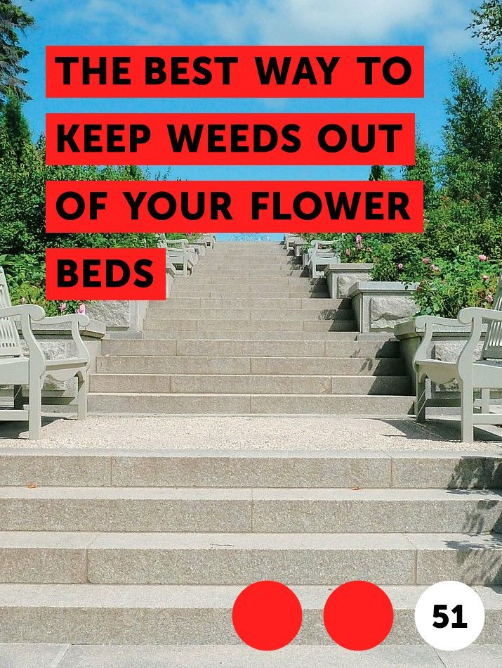 The Best Way to Keep Weeds Out of Your Flower Beds When