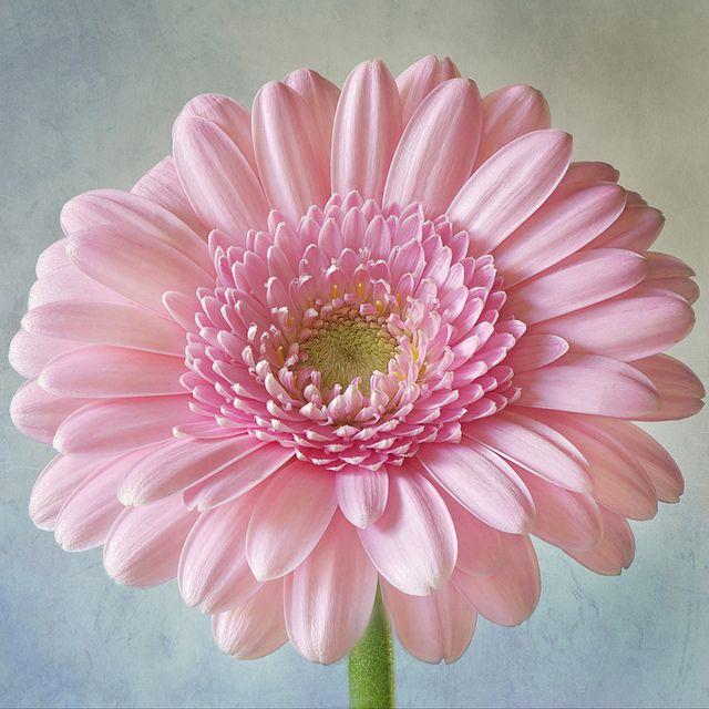 Happy Face by Jacky Parker Floral Art, via Flickr