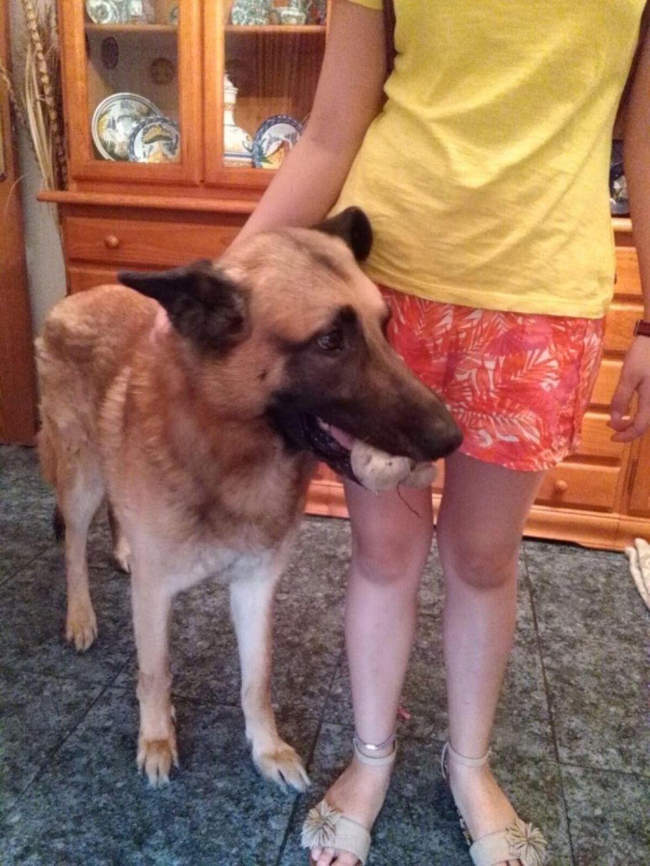 Adopta a Dalo ( Pastor Alemán ) - #adopta #perros