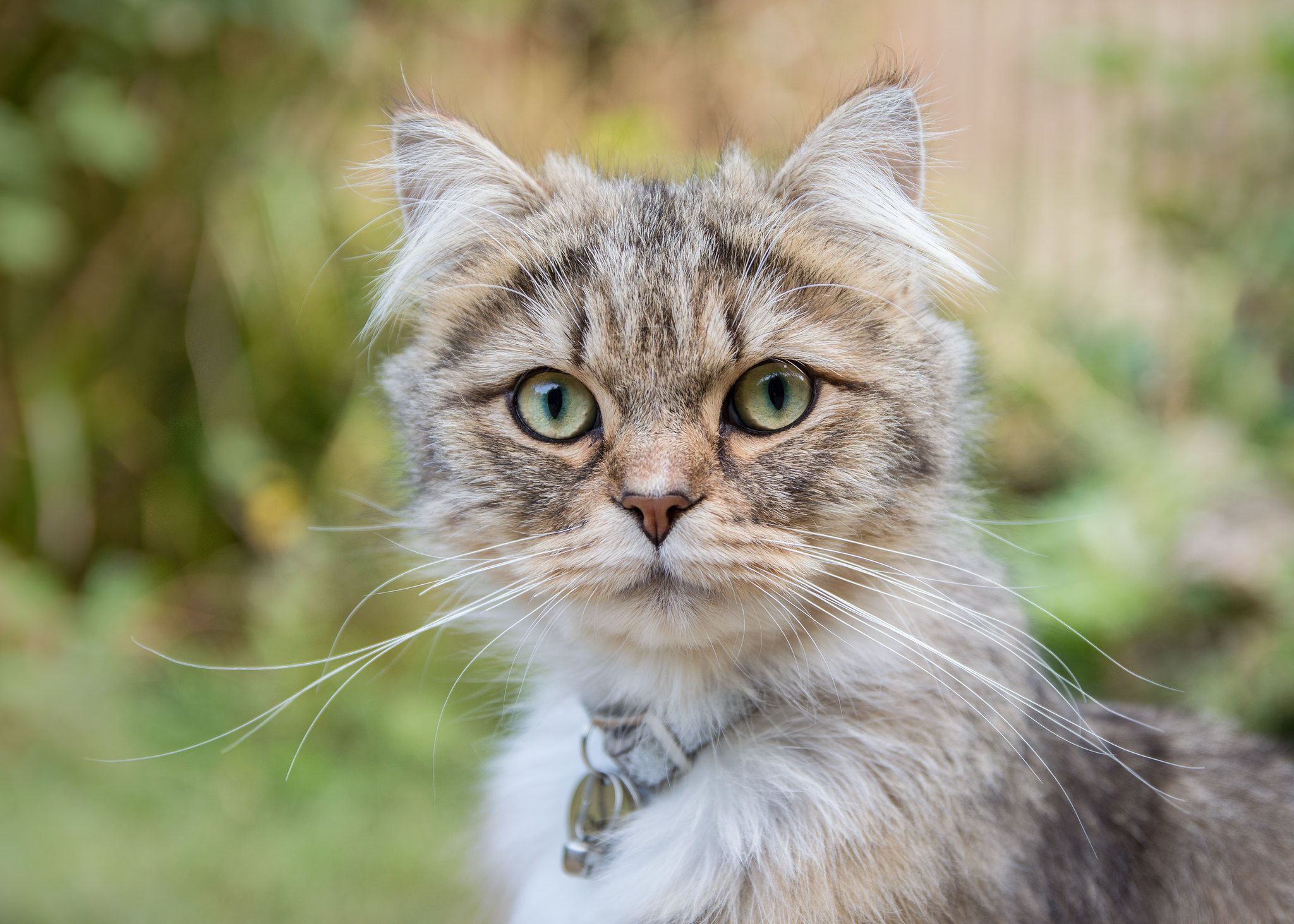 chewie Animals, Tabby cat, Cute animals