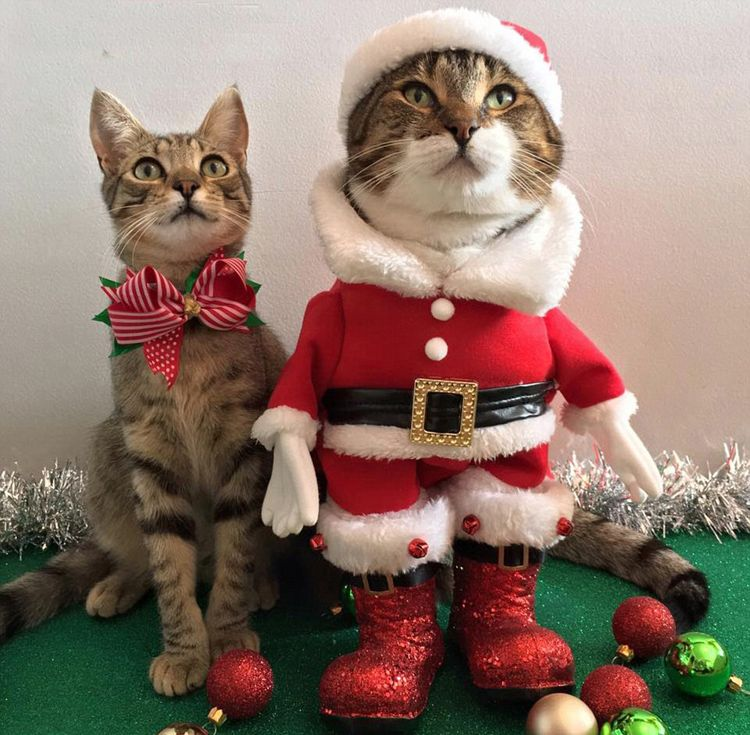 30 Adorable Animals Dressed Up For Christmas Christmas Cats Christmas Animals Dancing Cat
