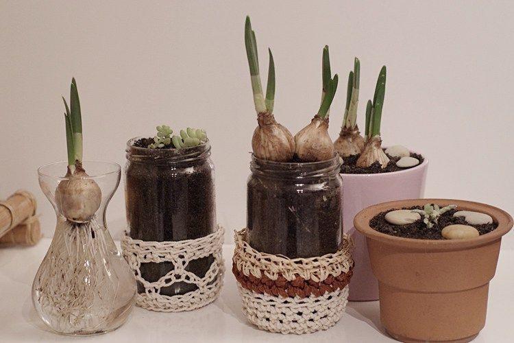 Petit jardin d'intérieur pour le printemps