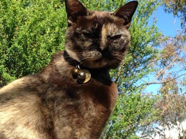 Reunited Cat Chapman Australian Capital Territory Act Australia L30984 Pets Cats Pet Dogs