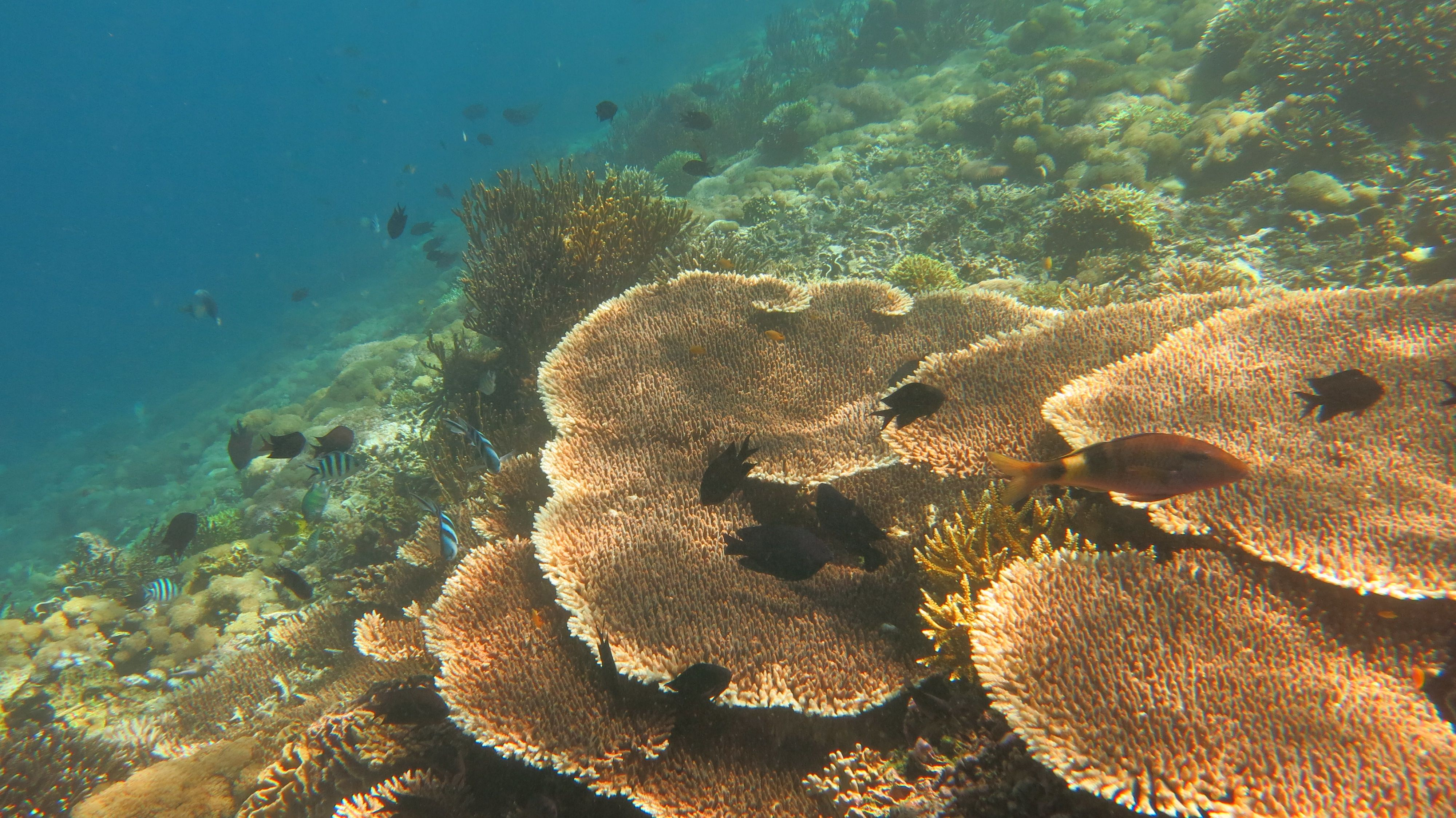 Indonesia - Komodo Resort