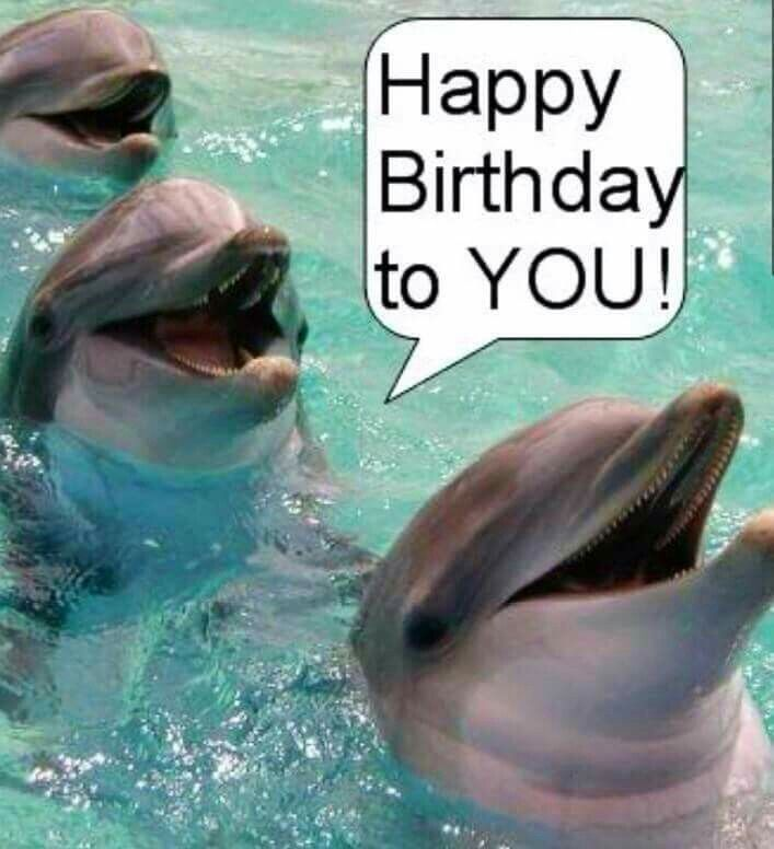 Happy Birthday With Dolphins Dolphin Photos Baby Dolphins Dolphins