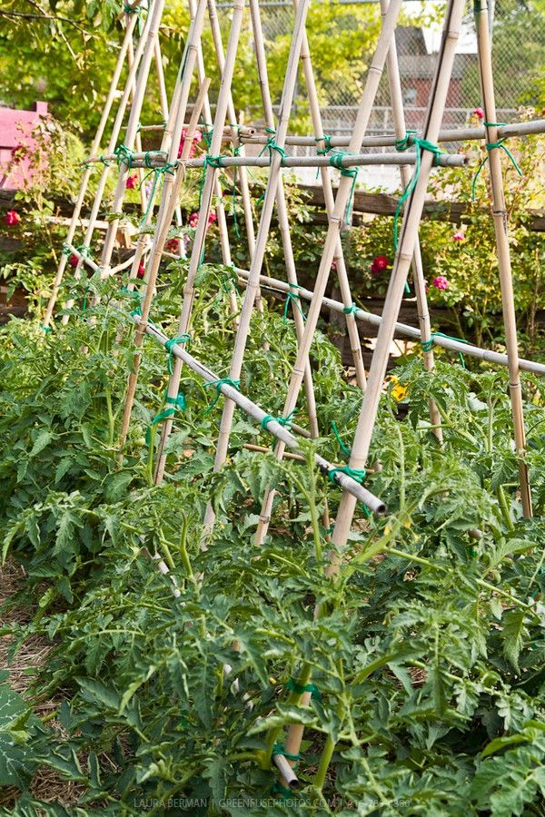 Pin by Mother 2 Mother Blog on Gardening Tips | Bamboo ...