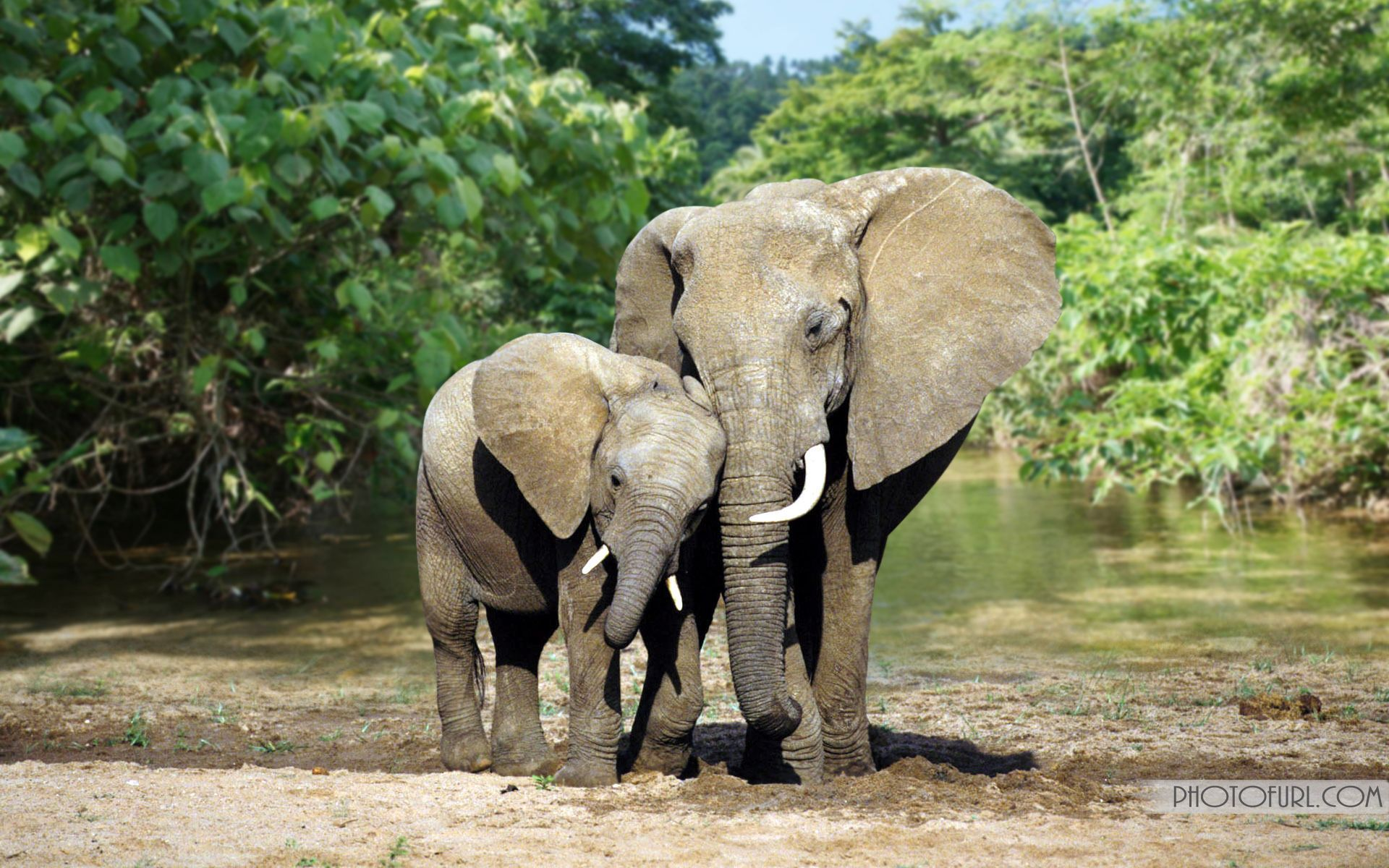 elephants are the social animals they live in groups and support
