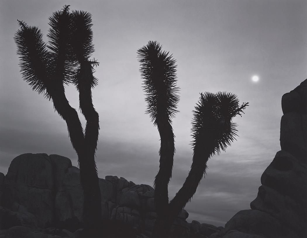 ANSEL ADAMS  1902 - 1984 Joshua Trees, Rocks, Moon, Joshua Tree National Monument, California Date:ca. 1948