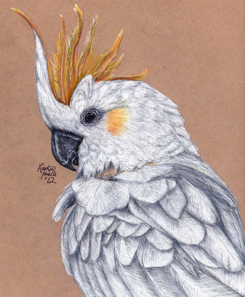 Carlitos the Citron-Crested Cockatoo by KristynJanelle on DeviantArt
