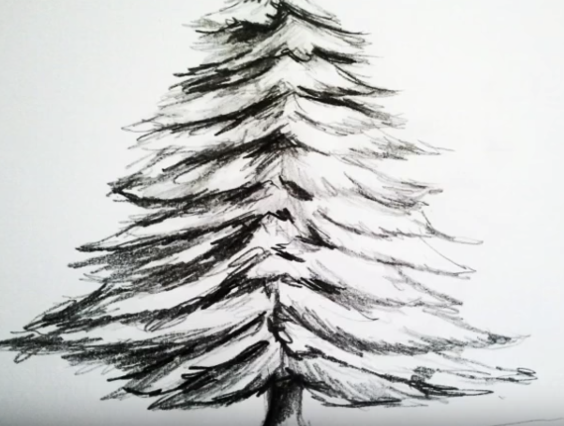 Winter Is Coming Now Is The Perfect Moment To Seat With Our Children Or Yourself And Learn How To Draw A Fir Realistic Christmas Trees Drawings Tree Drawing