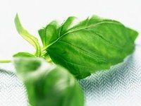 Recettes saveur : fines herbes et régime - Recettes allégées: astuces cuisine pour recettes allégées - aufeminin