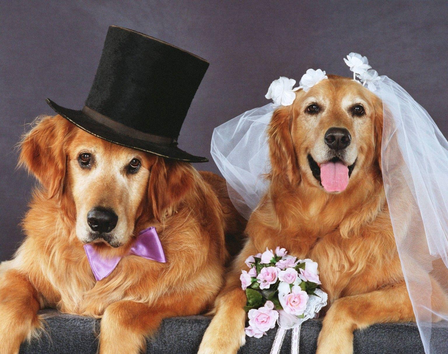 Схемы поз для свадебной фотосессии склонны