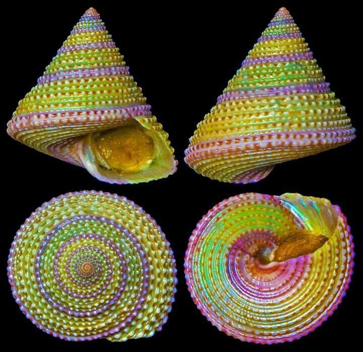 ألوان جميلة Sea Shells Shell Crafts Shells