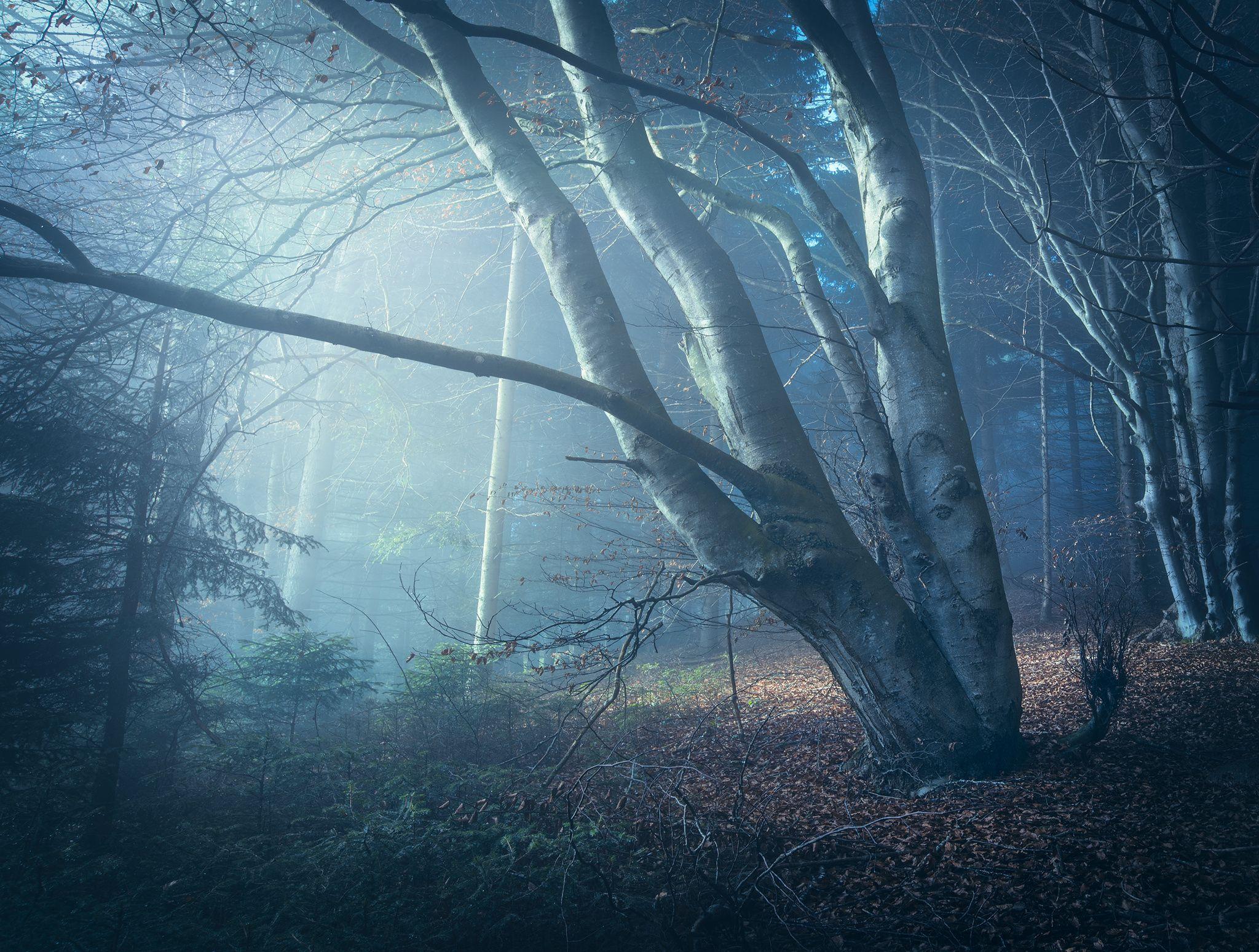 Fotograf Leaning to the Light von Martin Kornmesser auf 500px