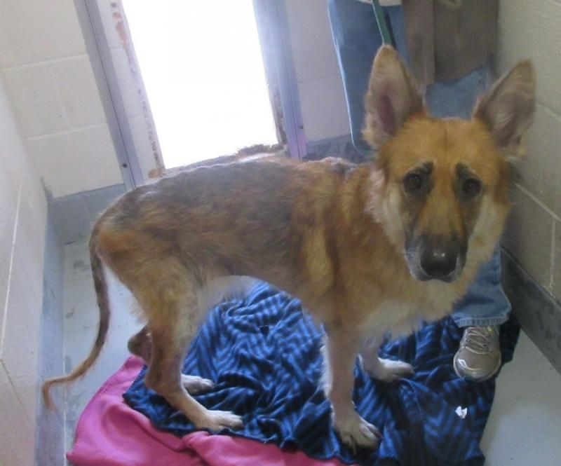 Craigslist Ohio Pets For Sale By Owner